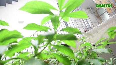 Hà Nội: Ngôi nhà ống sâu 35m vẫn ngập ánh sáng, nói không với khói bụi