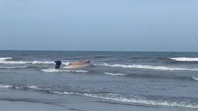Xác cá voi trôi dạt vào biển Hà Tĩnh