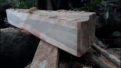 Cận cảnh hiện trường bị phá tại xã Sró (Kong Chro, Gia Lai)