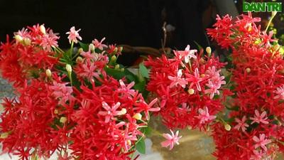 Muôn hoa khoe sắc ở Hội An trong những ngày cả nước chống dịch