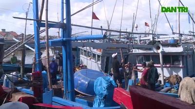 Phú Yên: Giá cá ngừ đại dương giảm mạnh vì không xuất khẩu được