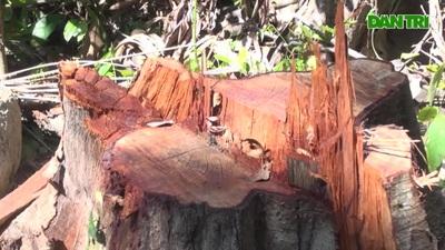 Chuyển hồ sơ vụ phá rừng ở Phú Yên sang Cơ quan cảnh sát điều tra