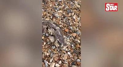 Xác sinh vật bí ẩn dạt vào bờ biển