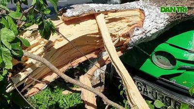 Phú Yên: Xe taxi leo lên dải phân cách tông đổ cây xanh