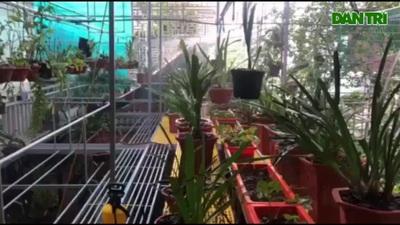 Hà Tĩnh: Giải nhiệt cho vườn lan quý giữa mùa nắng nóng
