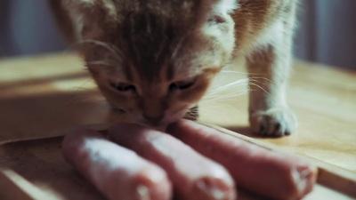Cho mèo ăn thịt bò sống, chế độ dinh dưỡng sang chảnh hơn cả người