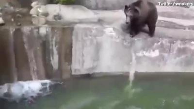 Người đàn ông say rượu mò vào vườn thú vật nhau với gấu
