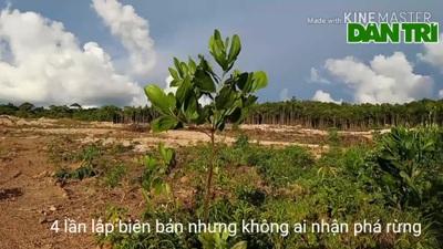 Rừng quốc gia ở Phú Quốc bị chặt phá