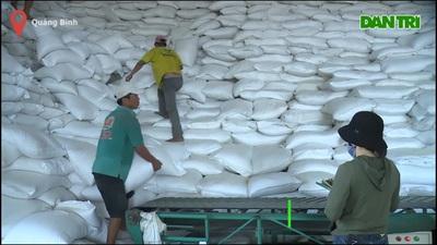 Phân bổ gần 900 tấn gạo hỗ trợ cho nhân dân thời điểm giáp hạt
