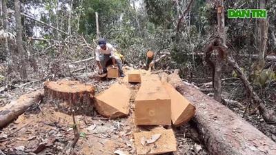 """Cận cảnh những cánh rừng Tây Nguyên """"kêu cứu"""""""