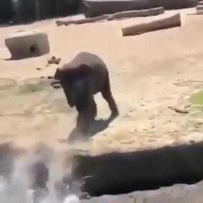 Voi con đẩy bạn xuống nước