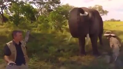 Khoảnh khắc chú voi đội thử mũ của nhiếp ảnh gia hết sức hài hước
