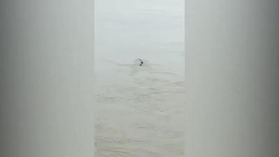 Thực hư chuyện quái vật dài 20m bí ẩn được phát hiện ở đập Tam Hiệp