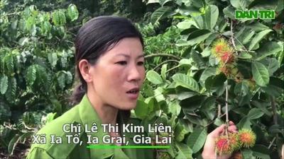 """Gia Lai: Về """"miệt vườn"""" xem cây ra quả thu trăm triệu đồng mỗi năm"""