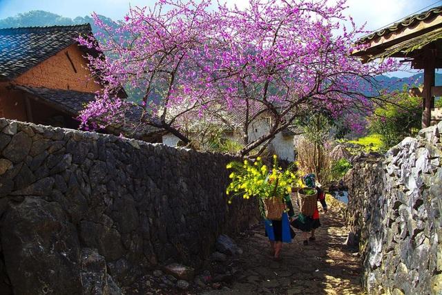 Sapa - mùa xuân về - Ảnh: Hạnh Đào