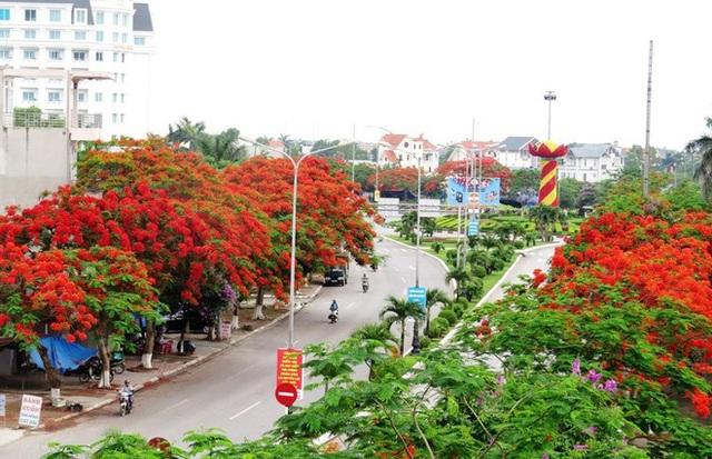 """Đường Phạm Văn Đồng - """"Con đường trồng nhiều cây hoa phượng nhất Việt Nam"""" ngập tràn sắc đỏ đan xen cùng sắc bằng lăng tím ngắt"""