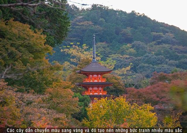 Mê đắm thu lá đỏ Nhật Bản - 1