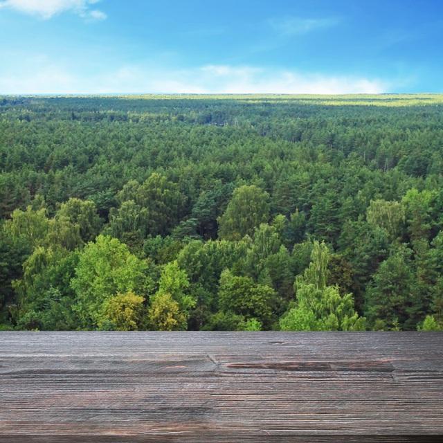 Những cánh rừng rộng lớn là món quà vô giá của thiên nhiên