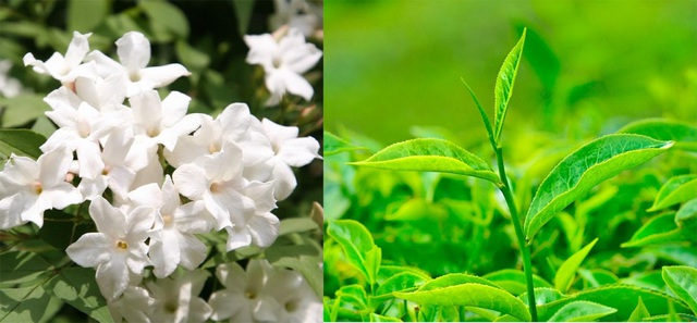 Khử mùi hiệu quả với hai nguyên liệu thiên nhiên – Hoa nhài và Trà xanh, đem đến cảm giác tươi mát và sạch sẽ cho trang phục