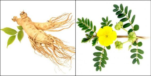 Nhân sâm, Bạch tật lê là những thảo dược hỗ trợ khả năng có thai tự nhiên cho người bị buồng trứng đa nang.