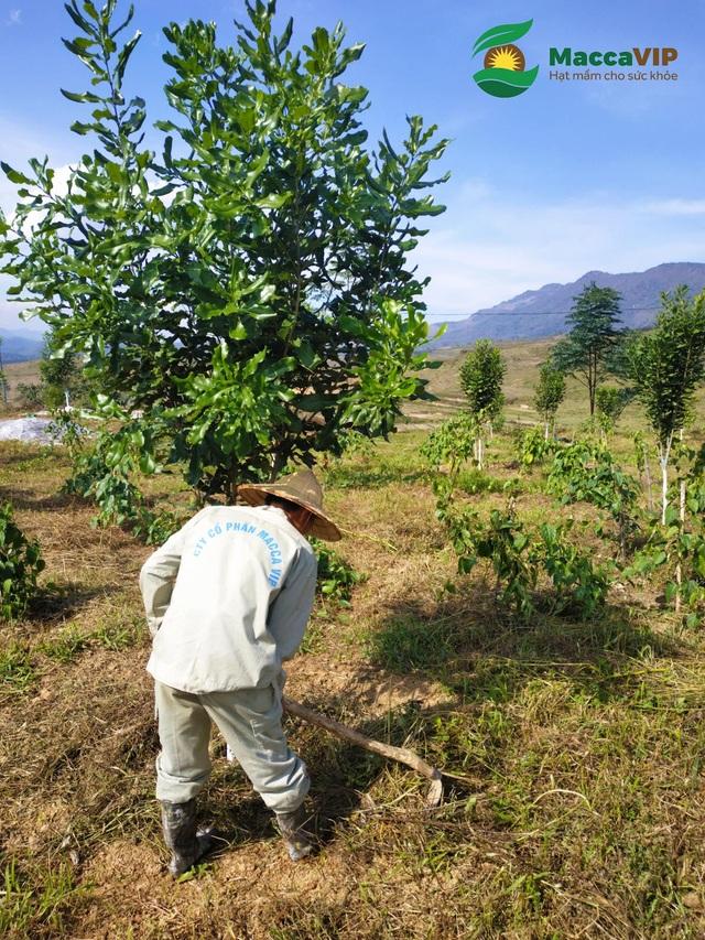 Bước đi đột phá của sản phẩm hạt Mắc ca Việt Nam cao cấp - Ảnh 4.