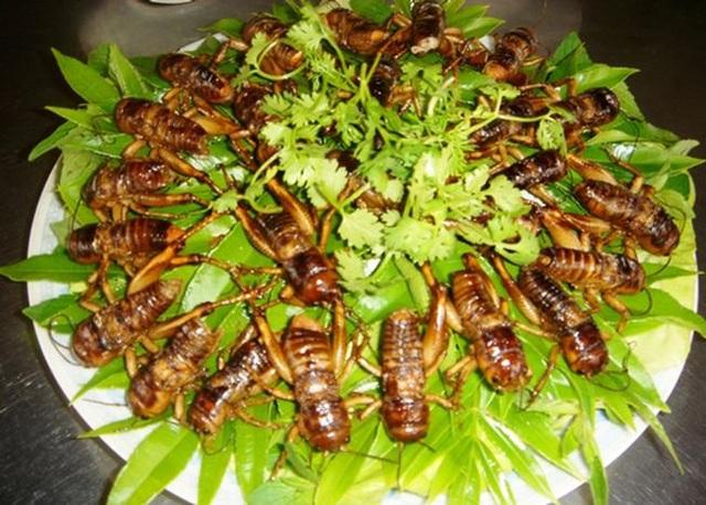 Đối với người Việt Nam, côn trùng là đặc sản tại nhiều địa phương, nhà hàng, khách sạn.