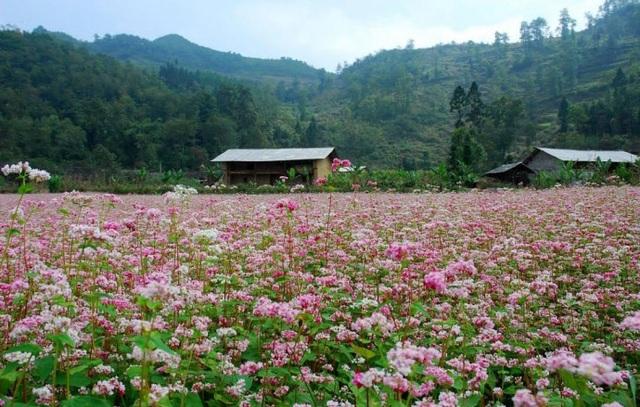 Khung cảnh nên thơ trữ tình ở Hà Giang. (Ảnh: Internet)