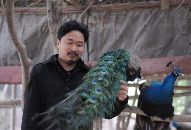 Những con chim công quý trong trang trại của anh Giáp. (Ảnh: danviet)