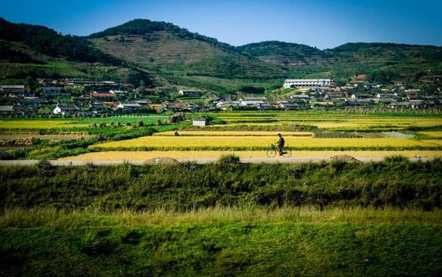 Cảnh đồng lúa yên bình và thơ mộng ở vùng quê.