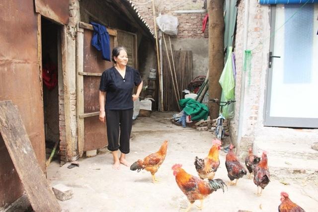 Chăm đàn gà là thú vui của bà Bình mỗi khi rảnh rỗi.