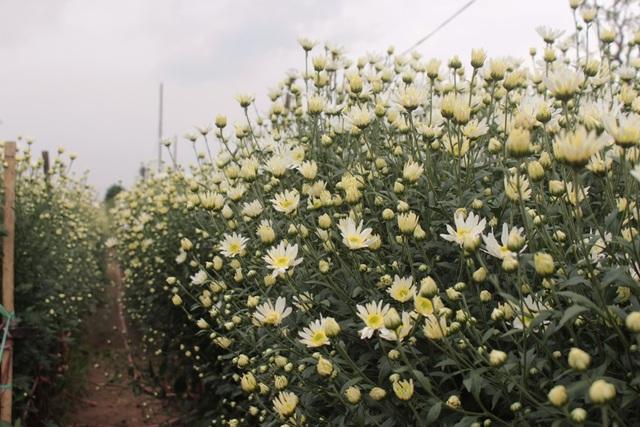 Loài hoa này mang một vẻ đẹp lạ lùng, khiến ai nhìn cũng mê đắm. (Ảnh: Hoàng Ngọc)