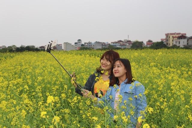 Ngẩn ngơ giữa cánh đồng cải vàng sưởi ấm trời đông Hà Nội - 4