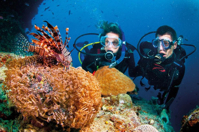Lặn ngắm san hô là trải nghiệm không nên bỏ qua ở Phú Quốc. (Ảnh: travel.com)