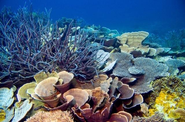 Thế giới san hô kỳ thú . (Ảnh: VRMtravel)