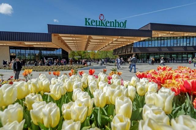 Keukenhof – công viên của mùa xuân