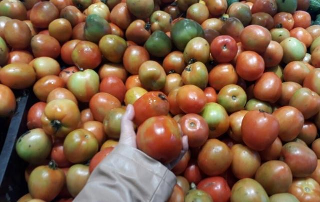 Dịch bệnh hoành hành nên giá cà chua tăng kỷ lục