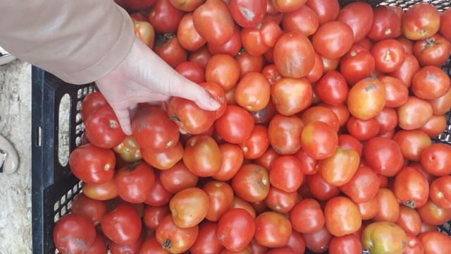 Cà chua Đà Lạt hiện đang có giá cao gấp 2 lần so với tháng trước