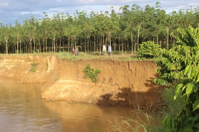 Khai thác cát ở sông Đồng Nai làm sạt lở đất nghiêm trọng cuốn trôi nhiều cây trồng của nông dân