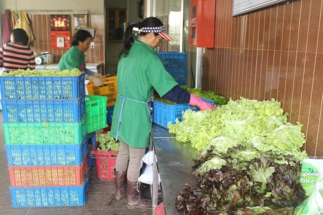 Mưa lớn kéo dài khiến giá nhiều loại rau Đà Lạt tăng chóng mặt