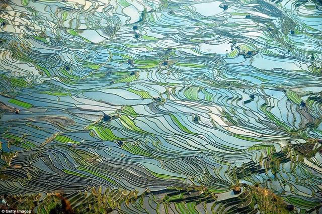 Hình ảnh về ruộng bậc thang Laohuzui ở Yuanyang được ghi lại trong khoảnh khắc đầy mê hoặc. Nơi này là một trong các di sản của UNESCO.