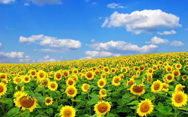 Rực rỡ sắc hoa mùa cuối năm - 5