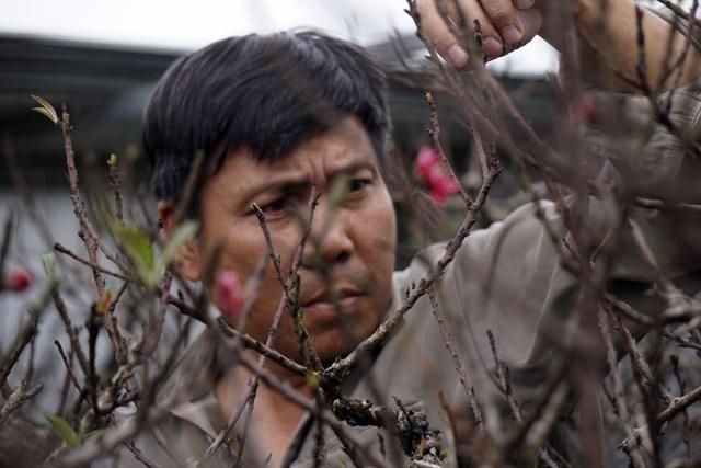 Việc đem cây đào Thất thốn về trồng đối với ông Hàm là sự run rủi, song đã theo cây đào này đã 26 năm và hiện tại đang rất chí thú với công việc của mình.