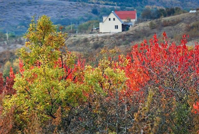 Lá cây đổi màu vào mùa thu tại làng Klinovka, quận Simferopol.