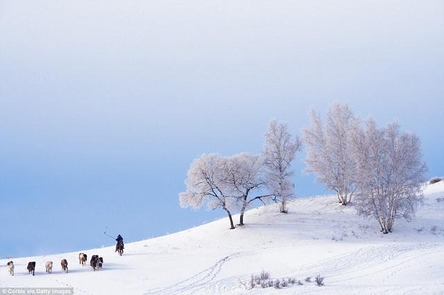 Khung cảnh mùa đông yên bình ở vùng đồng cỏ Bashang phủ đầy tuyết trắng. Khu vực này thuộc phía đông bắc tình Hà Bắc, Trung Quốc.