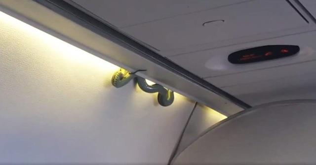 Hoảng hồn thấy rắn rơi trên máy bay - 1