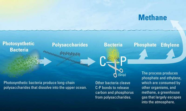 Giải thích nguồn gốc bí ẩn của metan dưới đại dương - 1