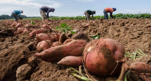 Nghiên cứu mối liên hệ giữa biến đổi khí hậu và nhu cầu lương thực - 1