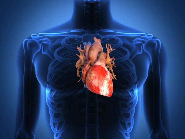 Canxi có thể làm phát triển mảng tích tụ trong động mạch - 1