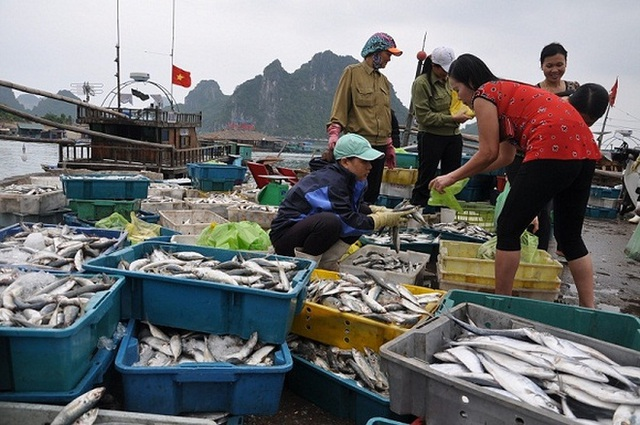Có 7 nhóm đối tượng được bồi thường thiệt hại do sự cố ô nhiễm biển miền Trung.