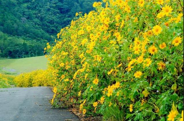 Rực rỡ sắc hoa mùa cuối năm - 3